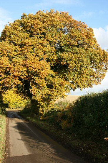 Country lane, near Rockbourne
