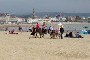 Donkey rides, beach, Weymouth