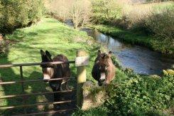 Donkeys, Oare Water, Oare, Exmoor (Lorna Doone Country)