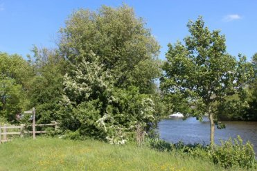 Dumsey Meadow and River Thames, Chertsey