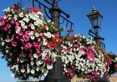 Flower display, Kingston Bridge, Kingston upon Thames