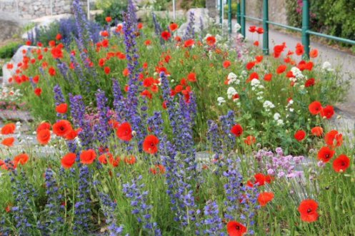 Flowers, gardens above Marine Lake, Weston-super-Mare