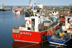 Harbour, Seahouses