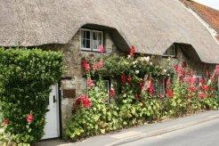 Hollyhocks, cottage, Ashbury