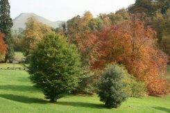Ilam Park, Ilam, Peak District