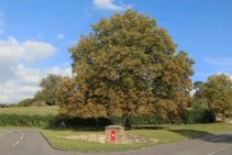 Post Box and Horse Chestnut tree, Ilmington