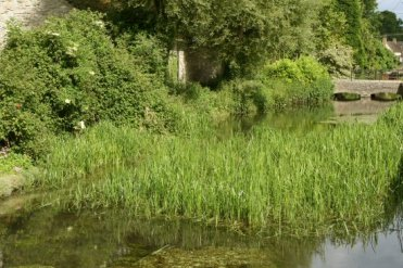 River Thames, Ashton Keynes