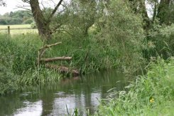 River Thames, Cricklade (first town on the Thames)
