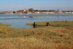 Salt marsh, Bosham Harbour, Bosham