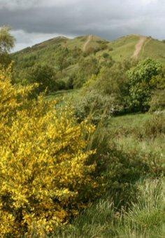 Summer Hill, leading to Worcestershire Beacon, Malvern Hills