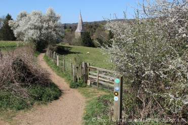 Footpath to Shere