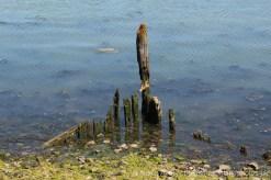 Wreck, Halstow Creek, Lower Halstow