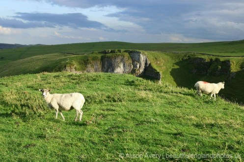 Sheep above Winnats Pass, Castleton, High Peak