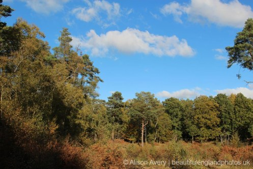 Woodland, Burnham Beeches