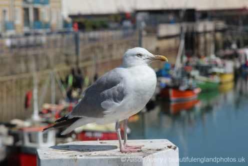 Seagull, Brighton Marina, Brighton