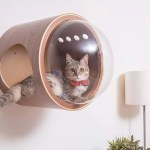 Luxury Cat Beds From Myzoo