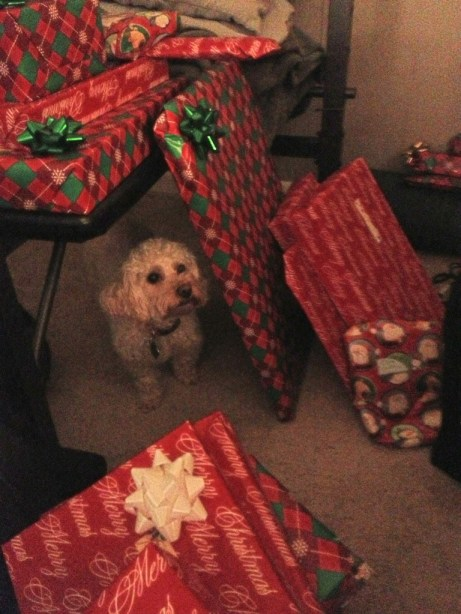 abbie christmas