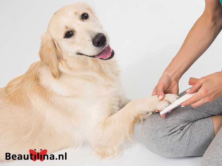 Manicure voor je hond