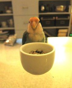 vriendje op tafel lief (3)