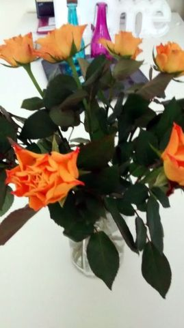 bloemen nieuwe huis