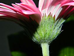 bloem macro