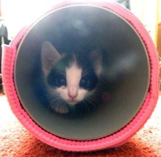 marie kitten in buis melt method