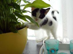 Planten zijn ook leuk!