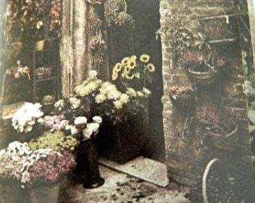 bloemen-nothing-but-nugi