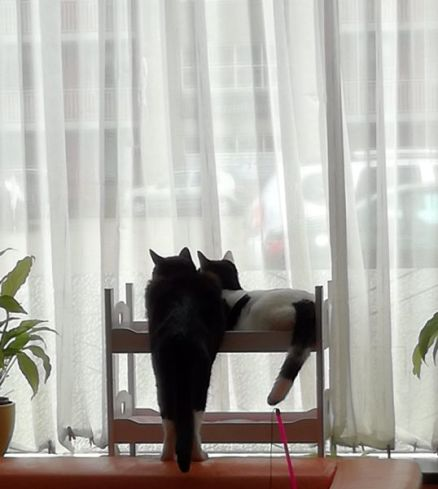 samen voor het raam - kopie