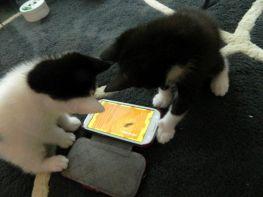 spelen met app smartphone
