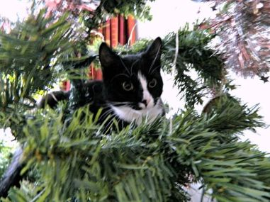 toulouse in kerstboom