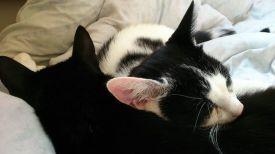 marie en toulouse slapen 1