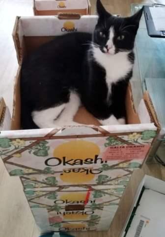 kattenflat-2