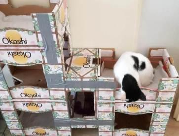kattenflat