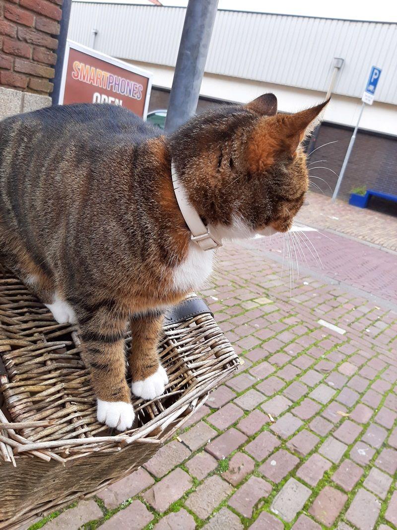 KeeK op de WeeK 43- Kat in de Stad & Chagrijnig van de Griep 17 kat KeeK op de WeeK 43- Kat in de Stad & Chagrijnig van de Griep