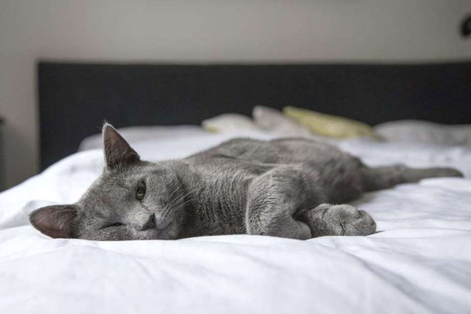 CleanRest Bedding With Cat