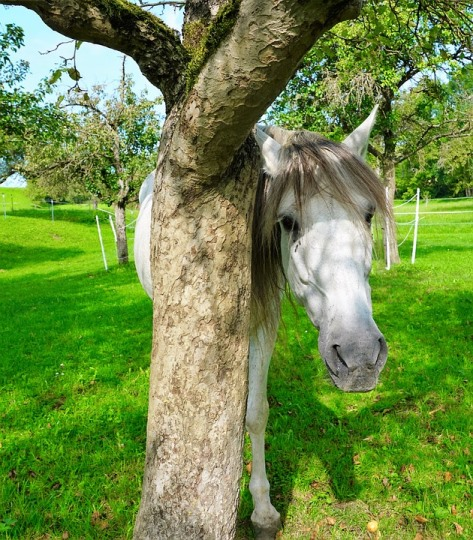 Conquering Shyness for the Full Life You Deserve Horse