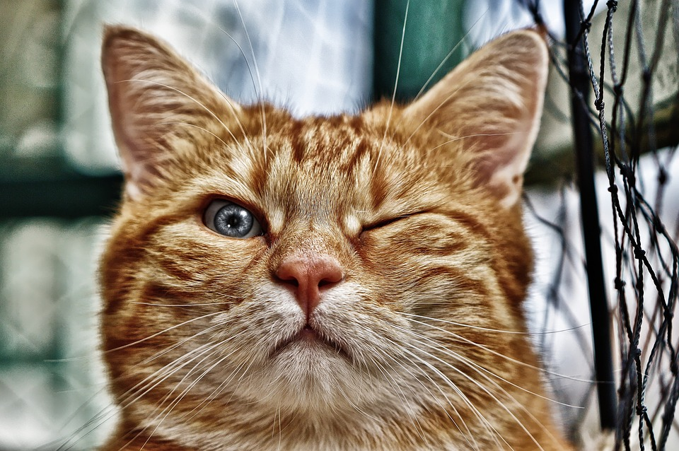 Winking Cat Pet Adoption Obstacles You May Find Hard to Believe