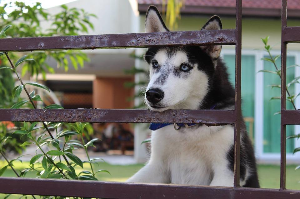 Dog Waiting Near Grill