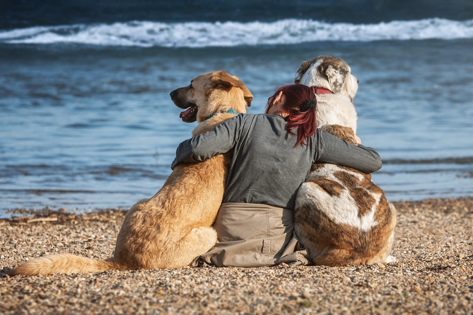 Healing Touch of Dogs for Pain and Stress