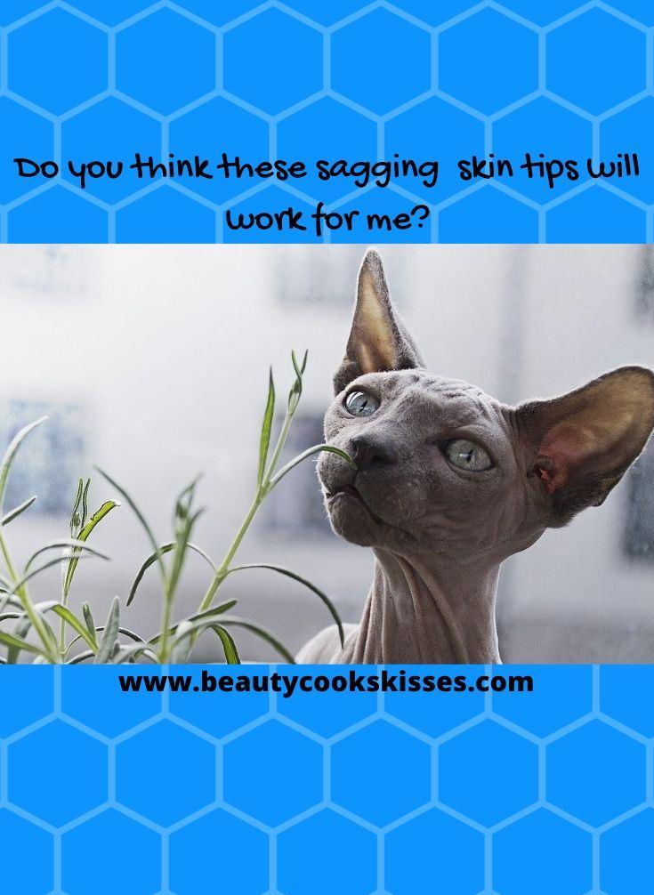 Sagging Skin Wrinkled Cat