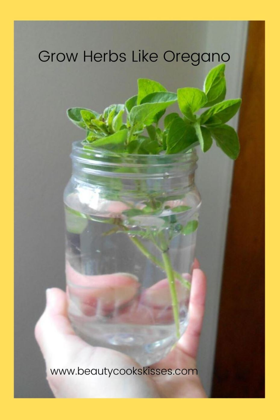 Grow Herbs Like Oregano
