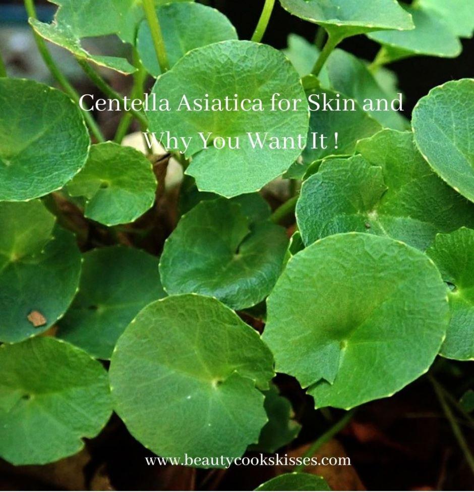 Centella Asiatica for Skin