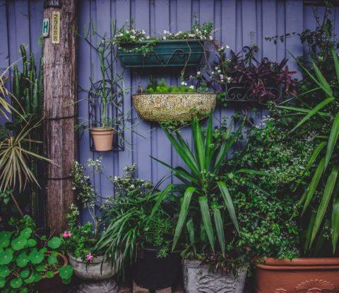 old fashioned gardening tricks