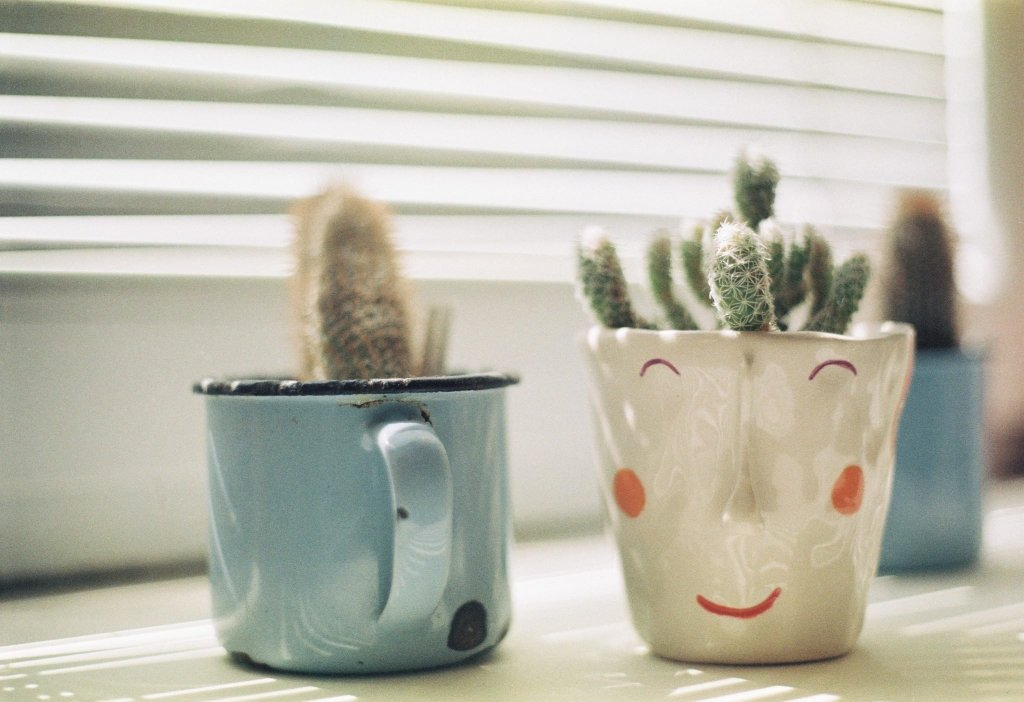cactus, improve your home, easy fixes