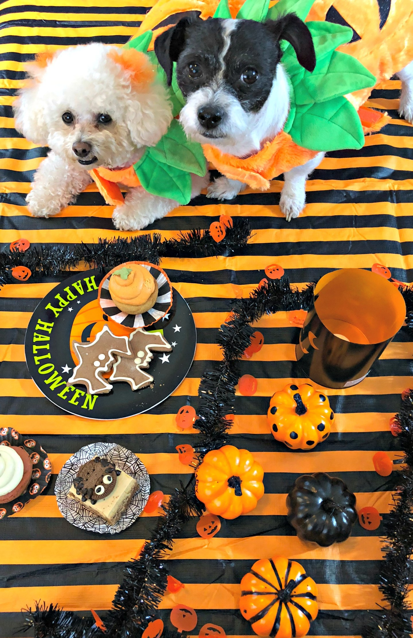 Tips For A Mess Free Dog Party // Beauty With Lily #ad #ProtectFromPetMess #SeasonalSolutions