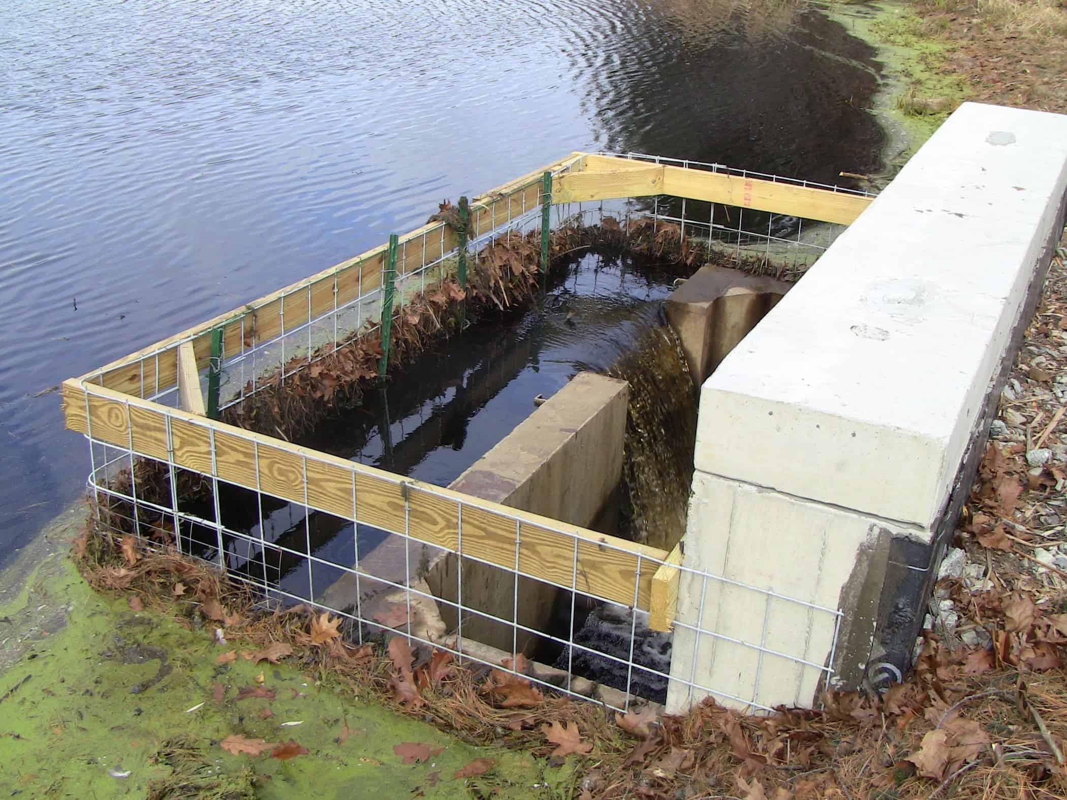Fish Pond Management