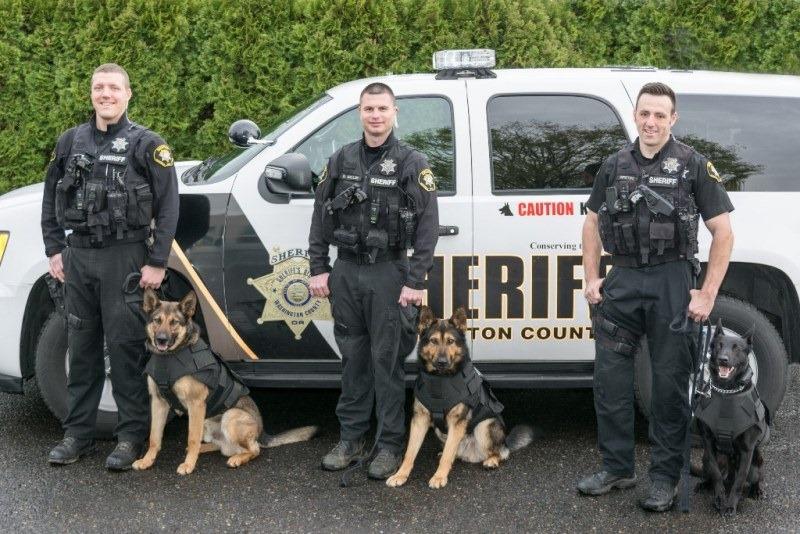 Protection Dog Training Portland Oregon