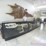 Lolong – Crocodile Farm