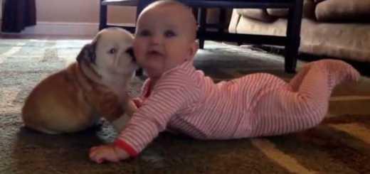 bebe e cachorrinho no momento mais fofo do ano